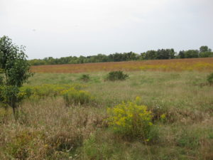 95 acres in Dover: Land ethics in play on this farm
